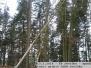 13.2.2019 TP Z. Arnoštov - stromy